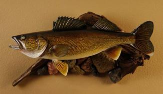 Fish Replica Mounts at Fibertech Productions